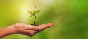 Masters Positions in Environmental Studies – York University